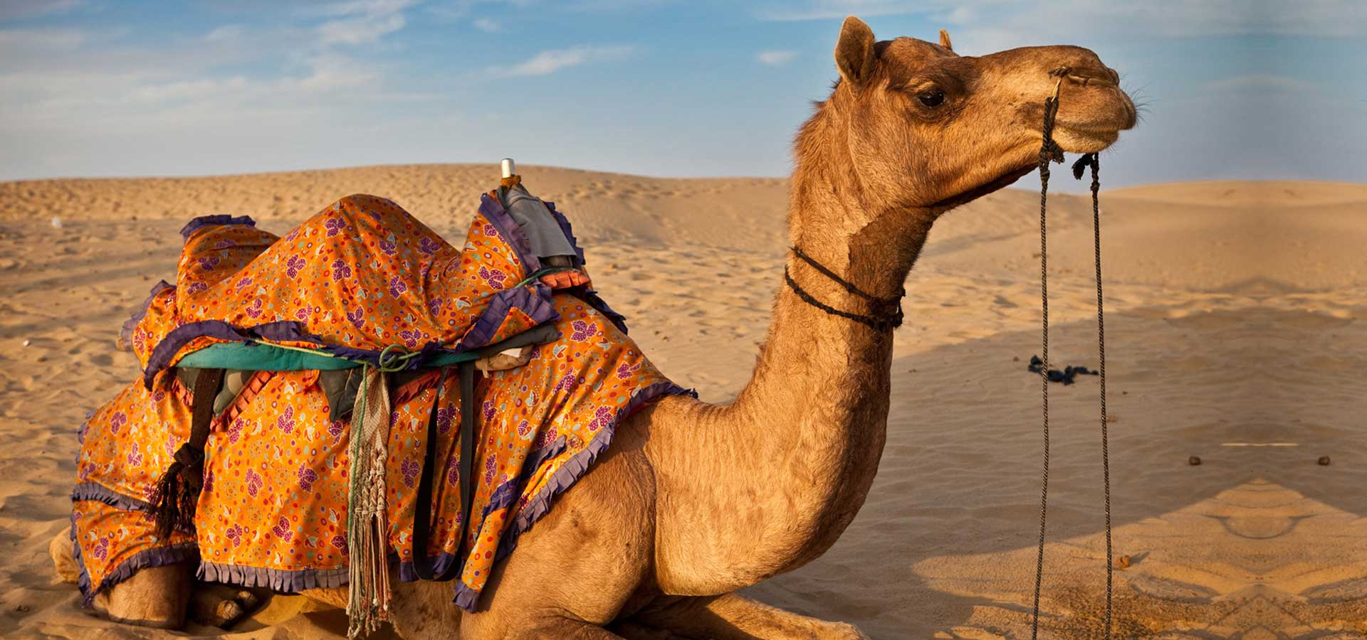 Morocco-Camel-tours